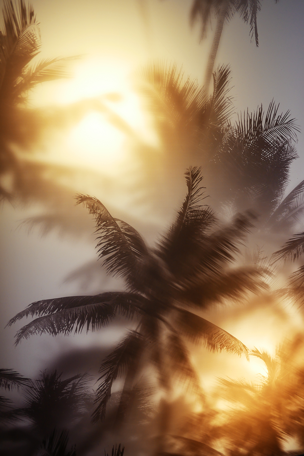 ISLAND-poke-decals-broadgate--lights-cool-palm-tree-details-graphics-design
